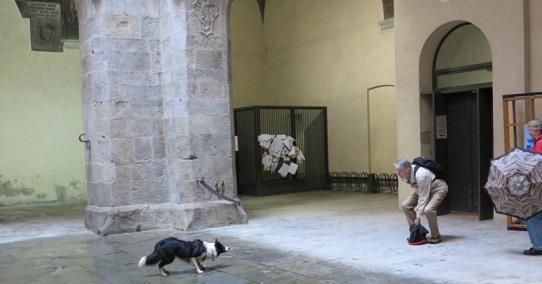 Pistoia Dog 02 542