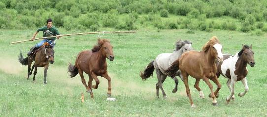 Mongolian horsemen 542
