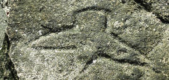 Ha'apai bird petroglyph