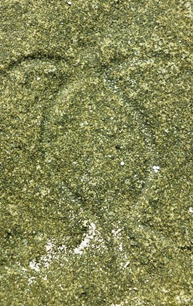 Ha'apai turtle petroglph 271