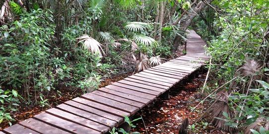 IMG_3551 - walkway, Muyil 542