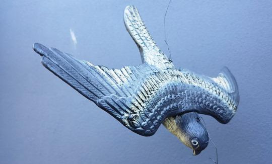 IMG_8989 - plastic crow - 540