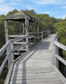 IMG_9040 - mangrove boardwalk, Bunbury - 270