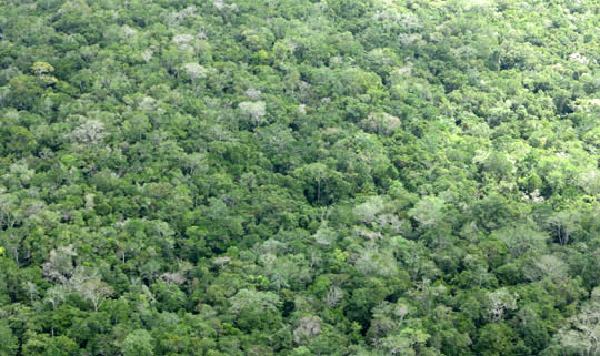 IMG_5716 - Maya Biosphere Reserve, Flores to El Mirador - 540