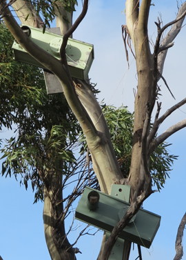 IMG_7034  - orange-bellied parrot nesting boxes - 270