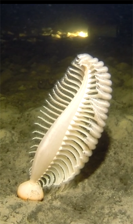 Sea pen Port Davey - 270