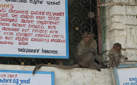 IMG_0104 - Virupaksha Temple 540