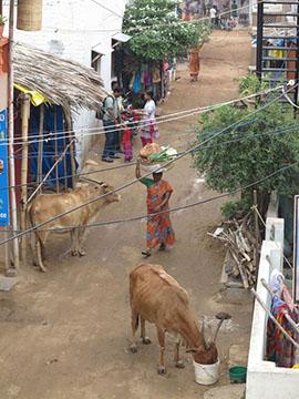 IMG_0276 - Hampi Bazaar - 270